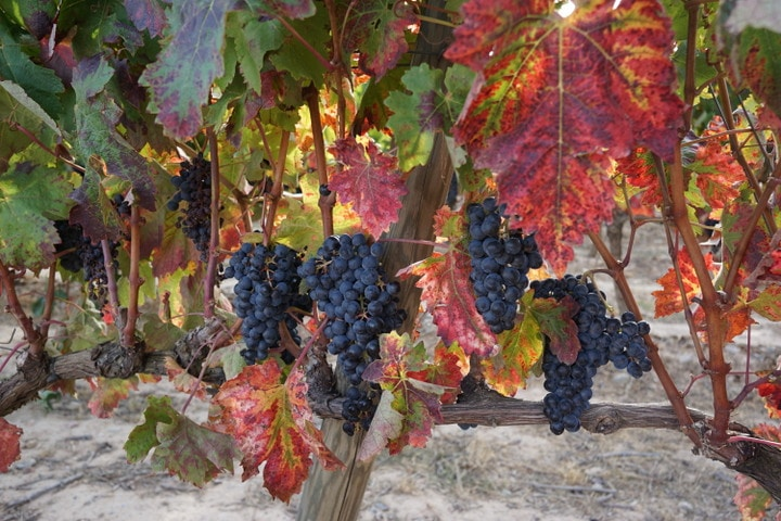 Bodega Ysios; Best bodegas in La Rioja
