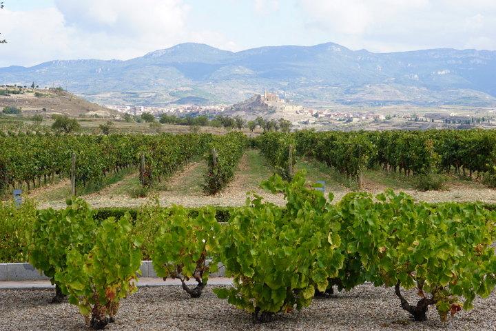 Vivanco Wine Museum in La Rioja