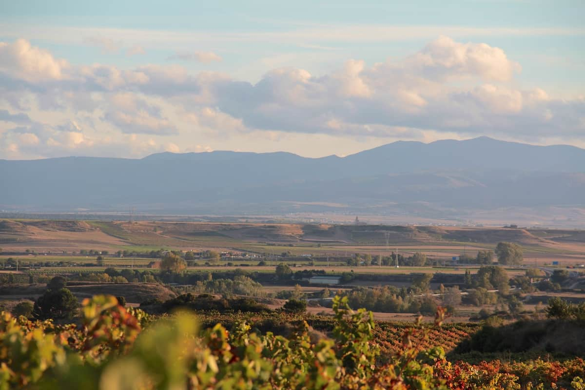View over vineyards with mountains silhouetted in the distance