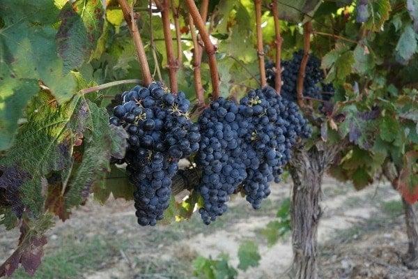 Top vineyard tours near Santiago de Compostela