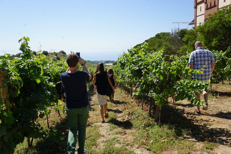 Wine and cava day trip from Barcelona with Devour Tours.
