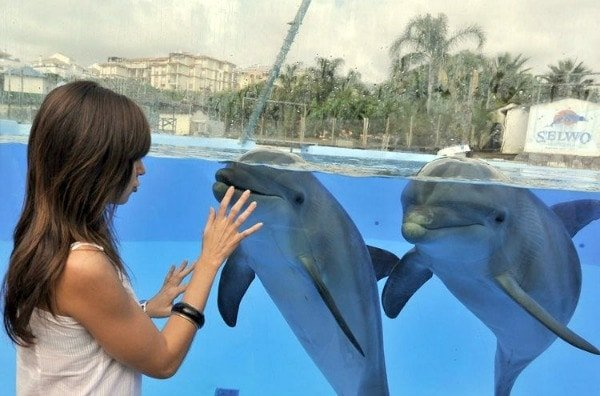 The Selwo Marina Delfinarium is one of the most unique kid-friendly experiences in Malaga!