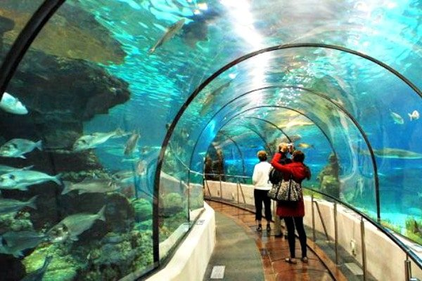 Visit Sea Life Benalmádena, one of the few kid-friendly activities in Malaga that will take you to a whole new world!