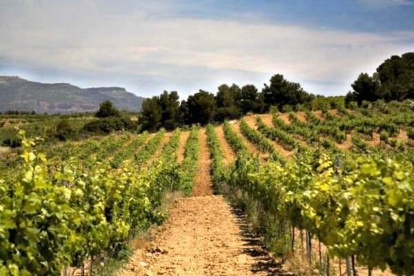 Requena is one of the best day trips from Valencia for wine lovers.