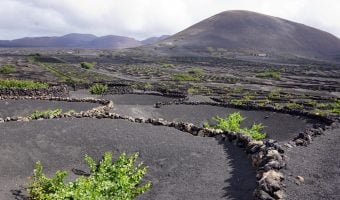 Lanzarote winery tour