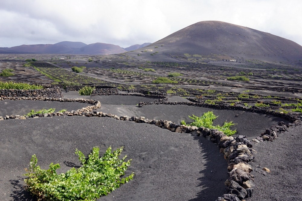 Lanzarote Winery Tour with Eco Insider