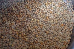 Lentils in water