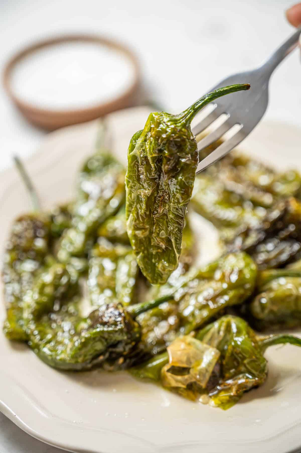 A plate of fried pimientos de padron with one pepper skewed on a fork.