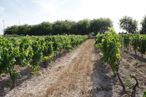 There are dozens of beautiful Malaga wineries, each of which deserves a visit!