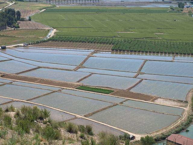 Spanish rice fields