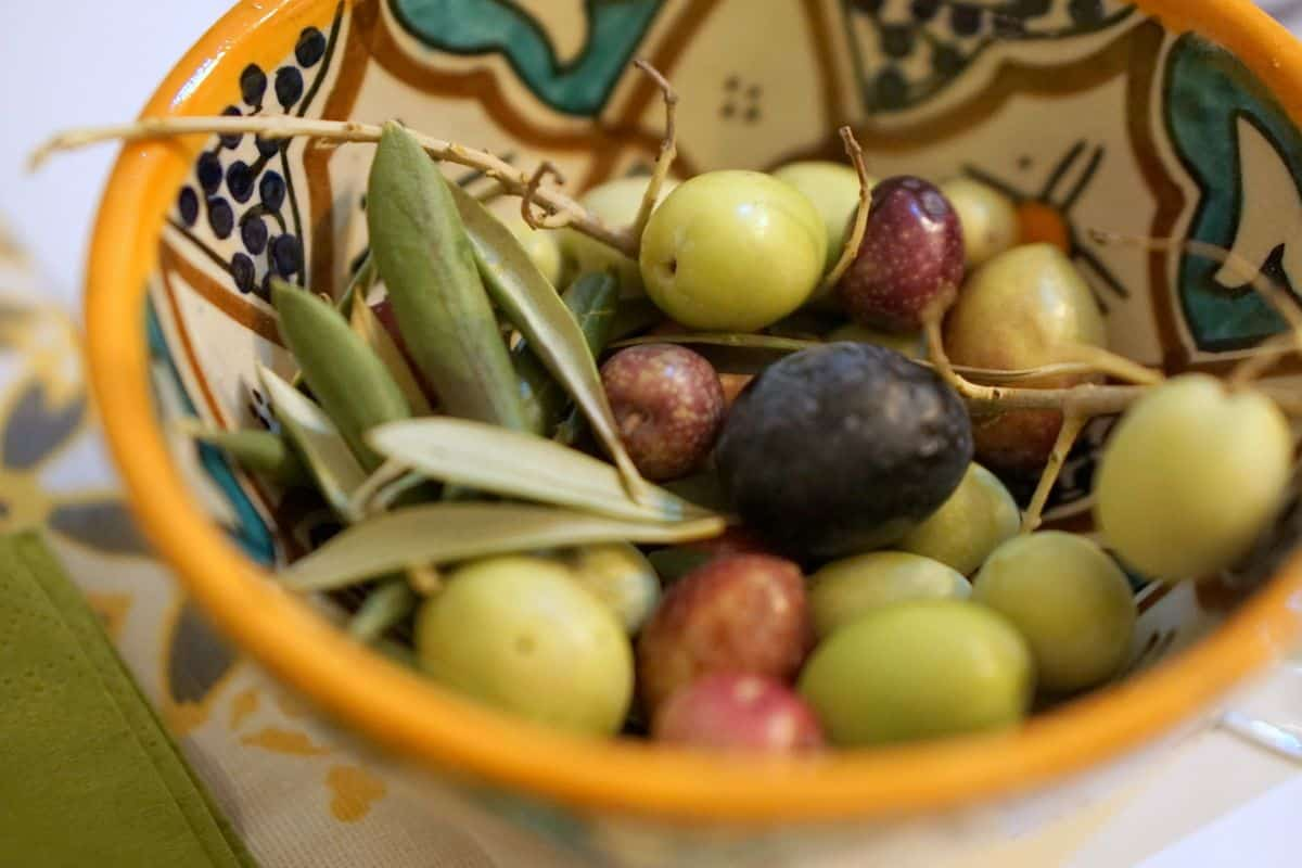 Ceramic bowl filled with olives in different stages of ripeness.