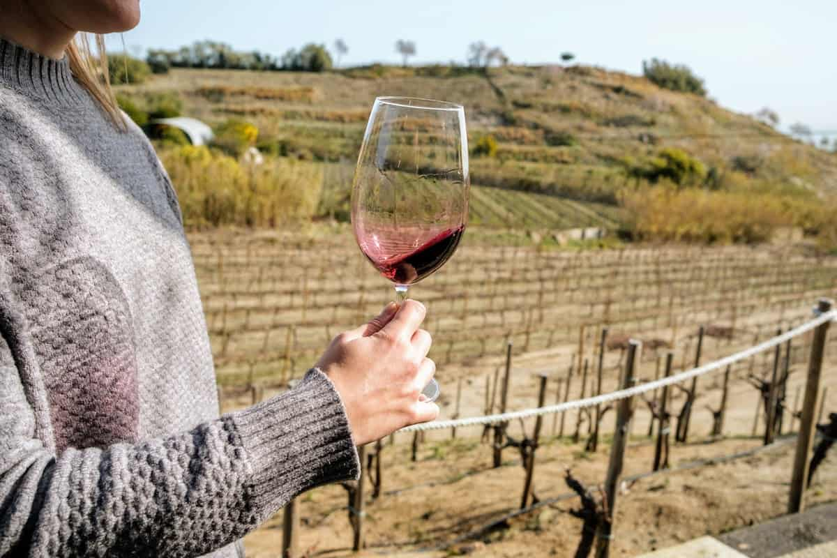 Close up of a person holding a glass of red wine with a vineyard in the background